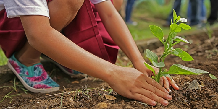 Person planting seeds in garden